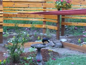 My friend the crow. I yelled at him a few times. We now have an understanding, I really don't like surprises in the bird bath.